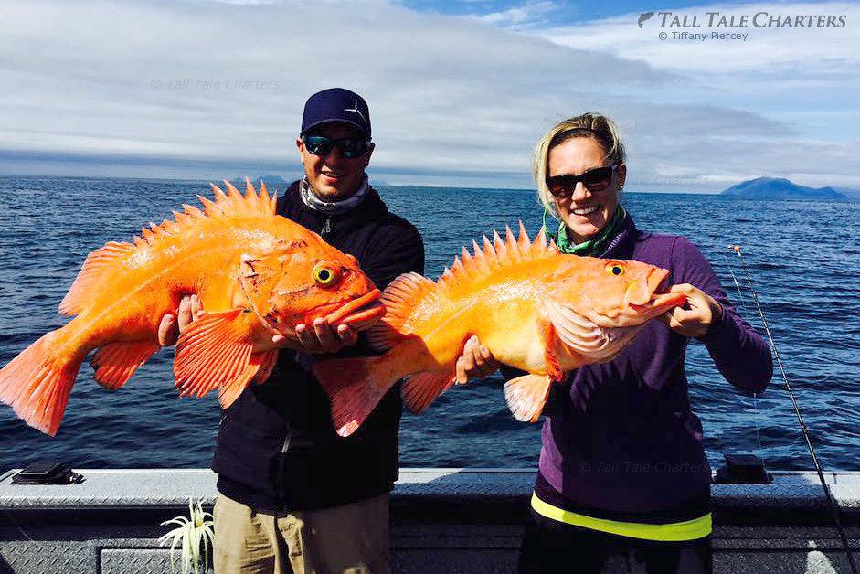 Alaska fishing charter reviews testimonials for Homer alaska halibut fishing charters