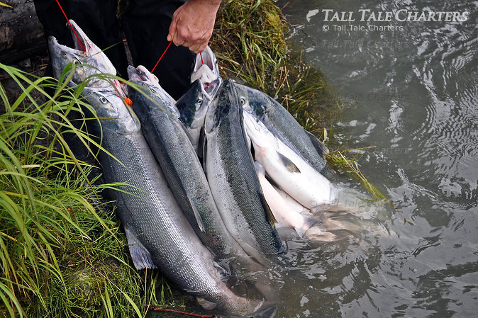 Sockeye Salmon Fishing