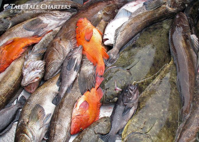 Multi-Species Fishing
