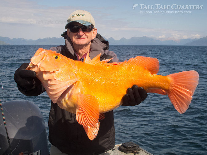 Big Yelloweye Rockfish