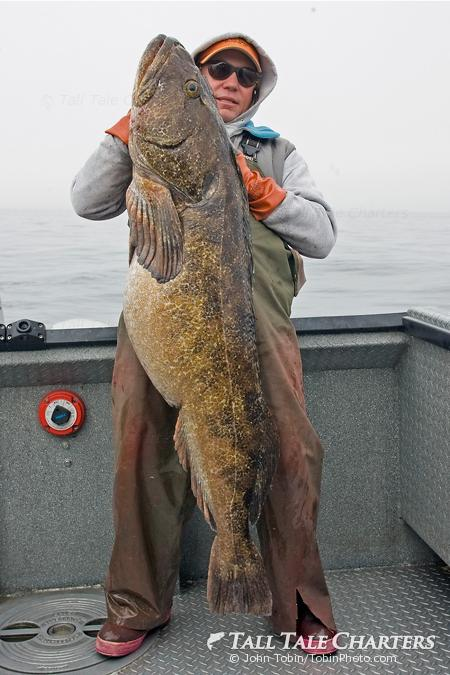 Huge Alaska Lingcod