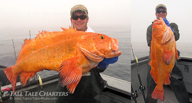 Huge Yelloweye Rockfish