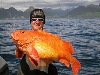 Alaskan Yelloweye Rockfish