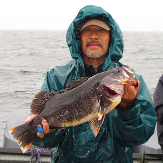 Hybrid Black Rockfish?
